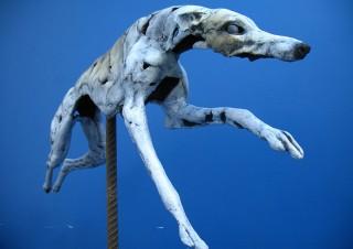 Greyhound (3)