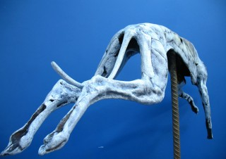 Greyhound (4)